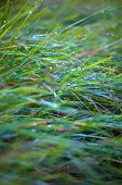 foto of faerys  - green fresh grass with faerie lens flare