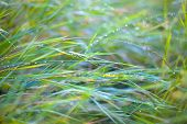 image of faerys  - green fresh grass with faerie lens flare