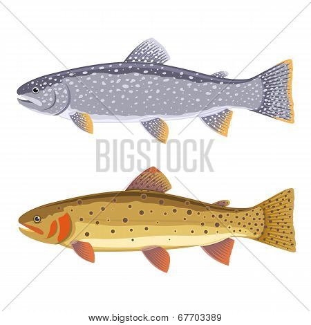 Lake And Cutthroat Trout