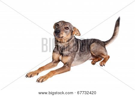 Mixed breed dog on white