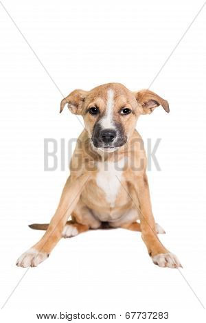 Mixed breed puppy on white