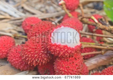Wild Fruit From Forest, Wild Lychee