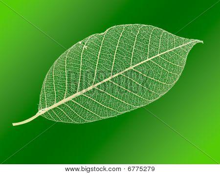 Openwork leaf.