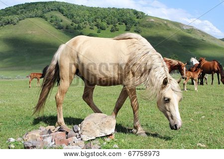 Big Horse Grazing On A Green Field