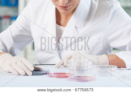 Scientist Checking Petri Dishes