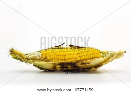 Closeup Grilled Corn On White Background.