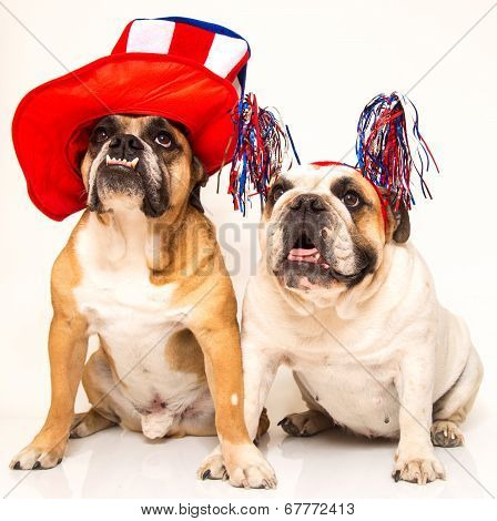 Two bulldogs posing for their holiday photo