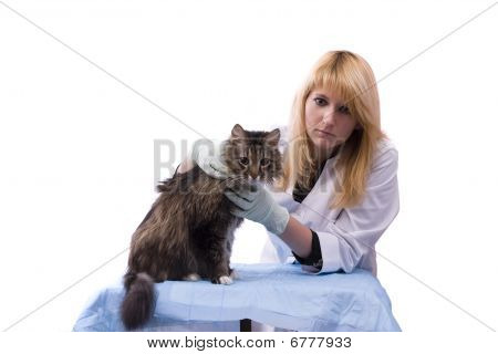 Vet Have Medical Examination Cat
