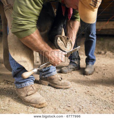 Farrier Filing Unshod Horse Hoof
