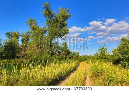 rut road across nice summer meadow