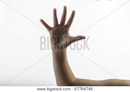 Young Hands Makes 5 Fingers Sign