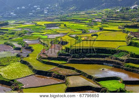 Rice-terraces Of Sagada