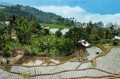 foto of west village  - Terrace rice fields near Lake Maninjau - JPG