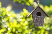 picture of sunshine  - A bird house or bird box in summer or spring sunshine with natural green leaves background - JPG