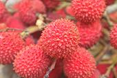 stock photo of laxatives  - wild fruit from forest wild lychee or Nephelium hypoleucum - JPG