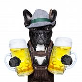 Постер, плакат: Bavarian Dog