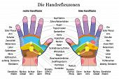 stock photo of reflexology  - Hand reflexology chart with accurate description of the corresponding internal organs and body parts - JPG