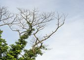 stock photo of dead plant  - A survive tree live on a dead tree - JPG