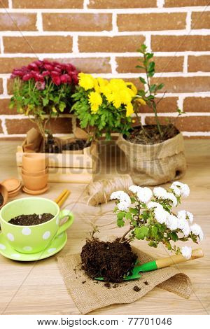 Flowers in pot, potting soil, watering can and plants on bricks background. Planting flowers concept