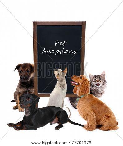 Pet adoptions concept