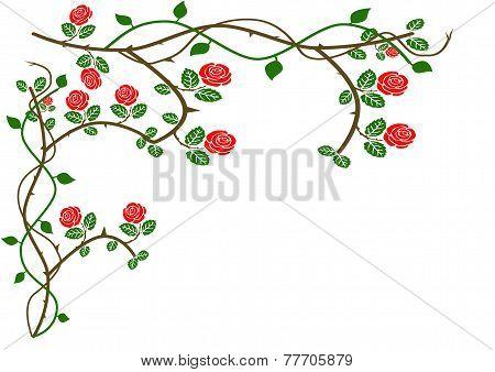Rose Design Border