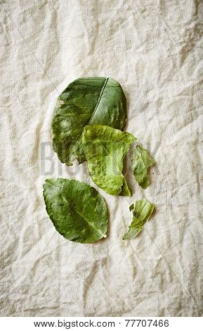 Kaffir lime leaves on a natural cotton fabric
