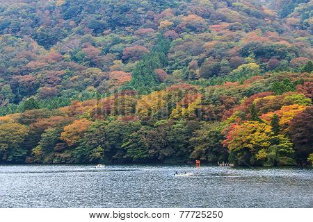 Beautiful Landscape Of Autumn Leaves Colors .