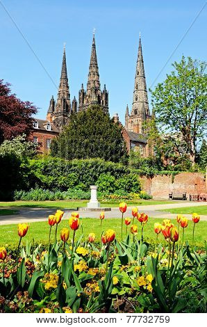 Lichfield Cathedral and tulips.