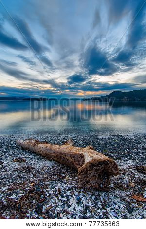 Drift Wood Along Shore At Sunset