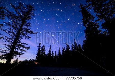 Blue Sky With Many Twinkling Stars In Forest