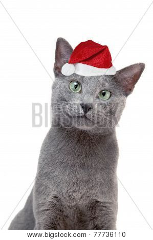 Cat With Santa's Hat