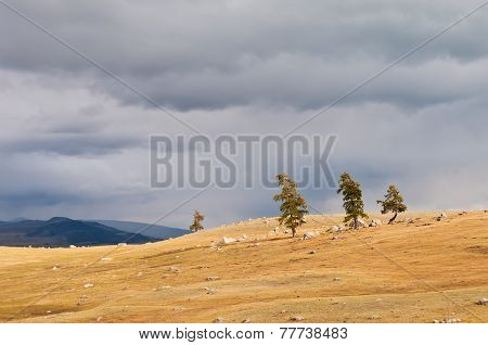 Storm Clouds Over Field With  Grass And Trees