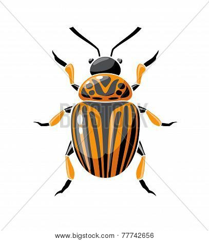 Colorado Potato Beetle.