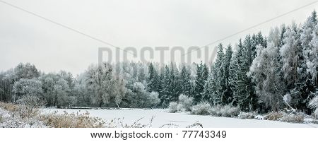 Panorama Winter Landscape With Snow And Trees