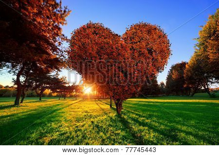 Heart shape tree with red leaves in park. Love symbol, concept for Valentine's Day, wedding etc.