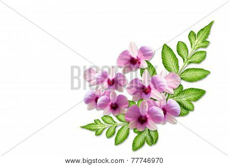 Pink Orchid Flower And Green Leaf On White Background