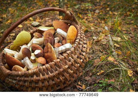 mushrooms in the basket