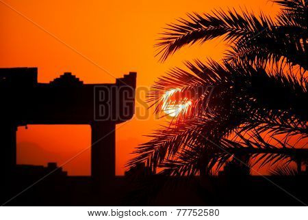 A Tropical Sunset, Sunrise with Palm Trees and building