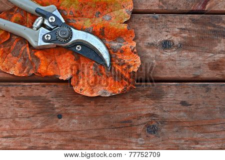 Pair Of Secateurs And Autumn Leaf On Rustic Wooden Table