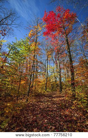 Autumn trees with colorful leaves in fall forest and hiking trail at Algonquin Park, Ontario, Canada.