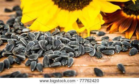 Yellow and red sunflowers and sunflower seeds on a wooden background. Selective focus.