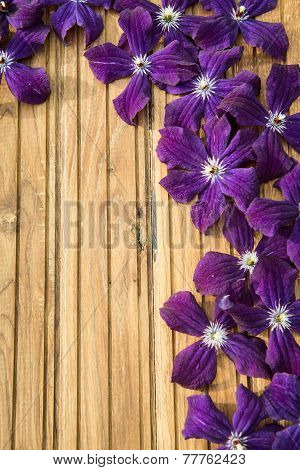 Clematis Blue Flowers On Wooden Background. Violet Garden Ackmanii Clematis.