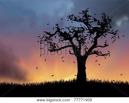 Autumn Landscape With Deciduous Tree At Sunset