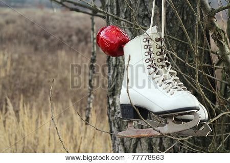 Pair of White Ice Skates and red apple hanging on the tree
