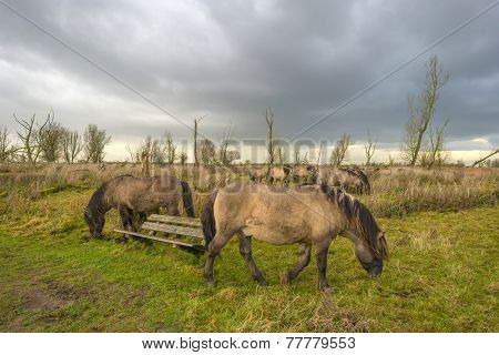 Deteriorating weather over horses in autumn