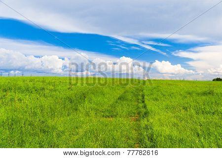 Vibrant Nature Scenic View