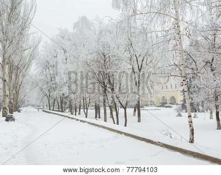 Winter park covered with white snow