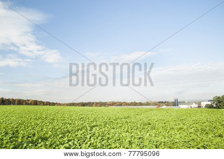 Green fields of crops in Lancaster County, Pennsylvania.
