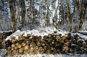 stock photo of timber  - Harvesting timber logs in a winter forest - JPG