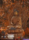 image of gautama buddha  - A Sakyamuni statue in temple. Gautama Buddha also known as Siddhartha Gautama Shakyamuni or simply the Buddha was a sage on whose teachings Buddhism was founded.